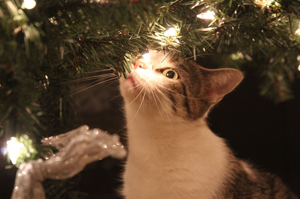 cat-investigating-christmas-tree
